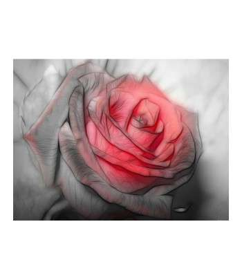 Tableau décoratif Beautiful rose Drawing