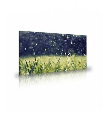 Tableaudécoratif Grass water drops