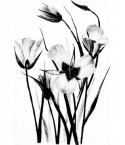 Tableau décoratif Flowers in black